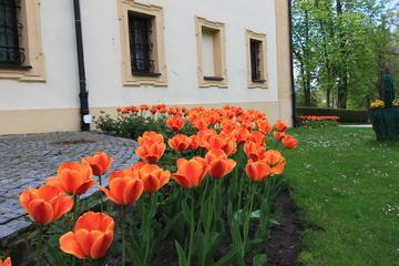 Galeria Kwitnący pałac